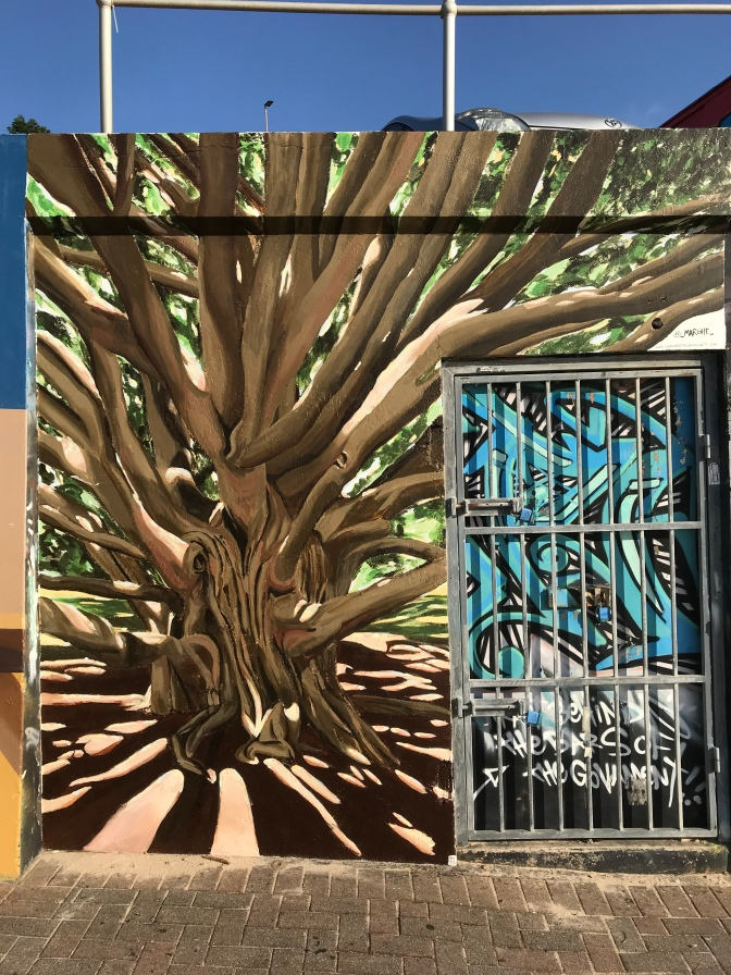 2017 - Margherita Sanguineti - Moreton Bay Fig Tree - Full