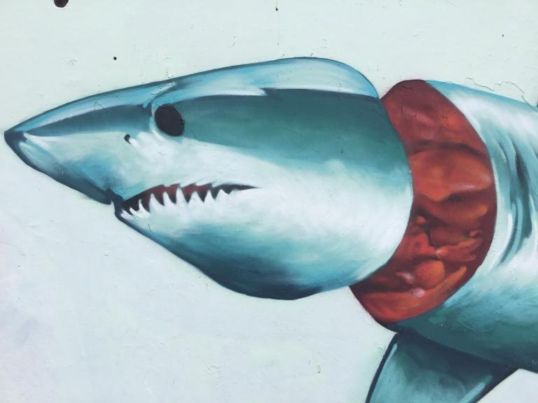 2018 - Apeseven - Exhibit A - Shark Head