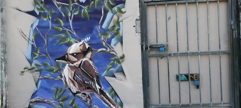 2019 – Kookaburra