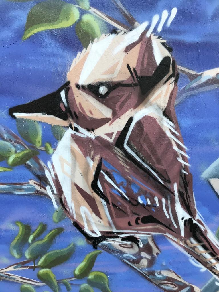 2019 - Kookaburra - Detail